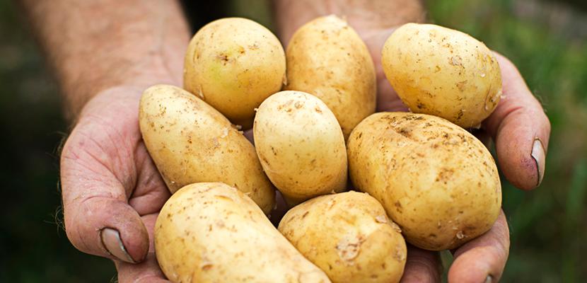 KNORR Картофельное пюре (2кг/8кг) - 100% натуральный картофель