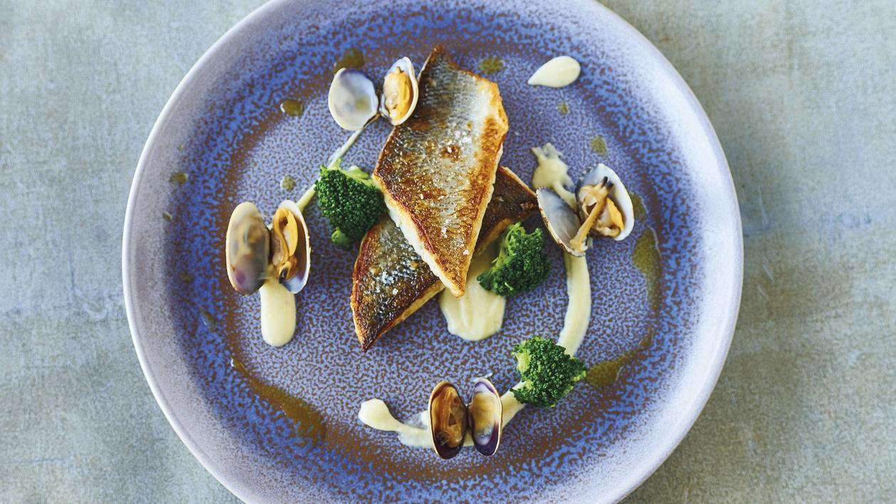 Wolfsbarsch mit Herzmuscheln, Broccoli, Sellerie und Petersilien-Öl