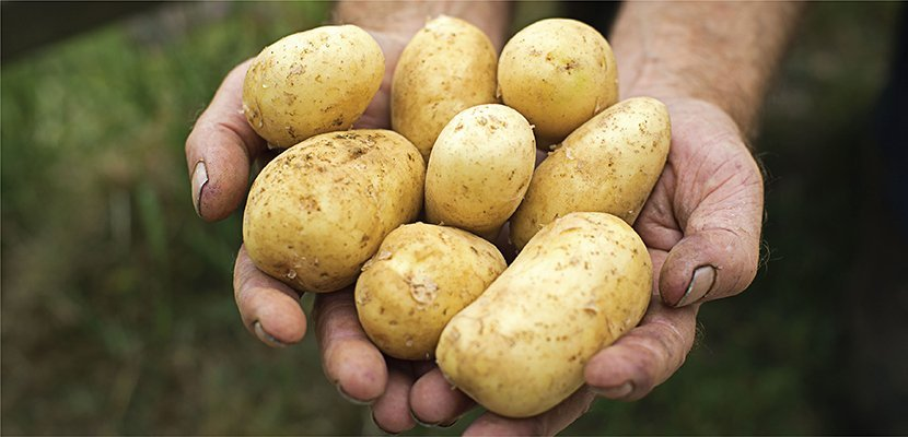 Knorr Mashed Potato (1x2Kg) - 100% more efficient