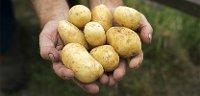 Knorr puré desidratado Batata 4Kg - 100% batata de origem sustentável