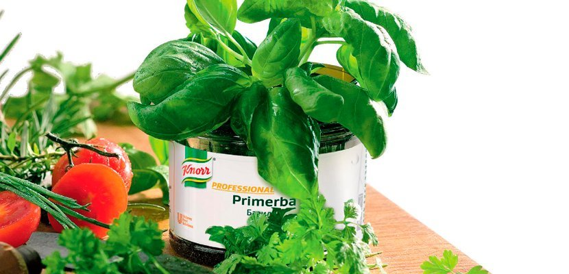 KNORR Primerba Базилик (0,34кг) - Идеален для приготовления супов на томатной основе, соуса Песто, салатных заправок на основе растительного масла и майонеза.